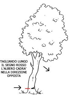Guida al risparmio tagliando la legna nel  bosco
