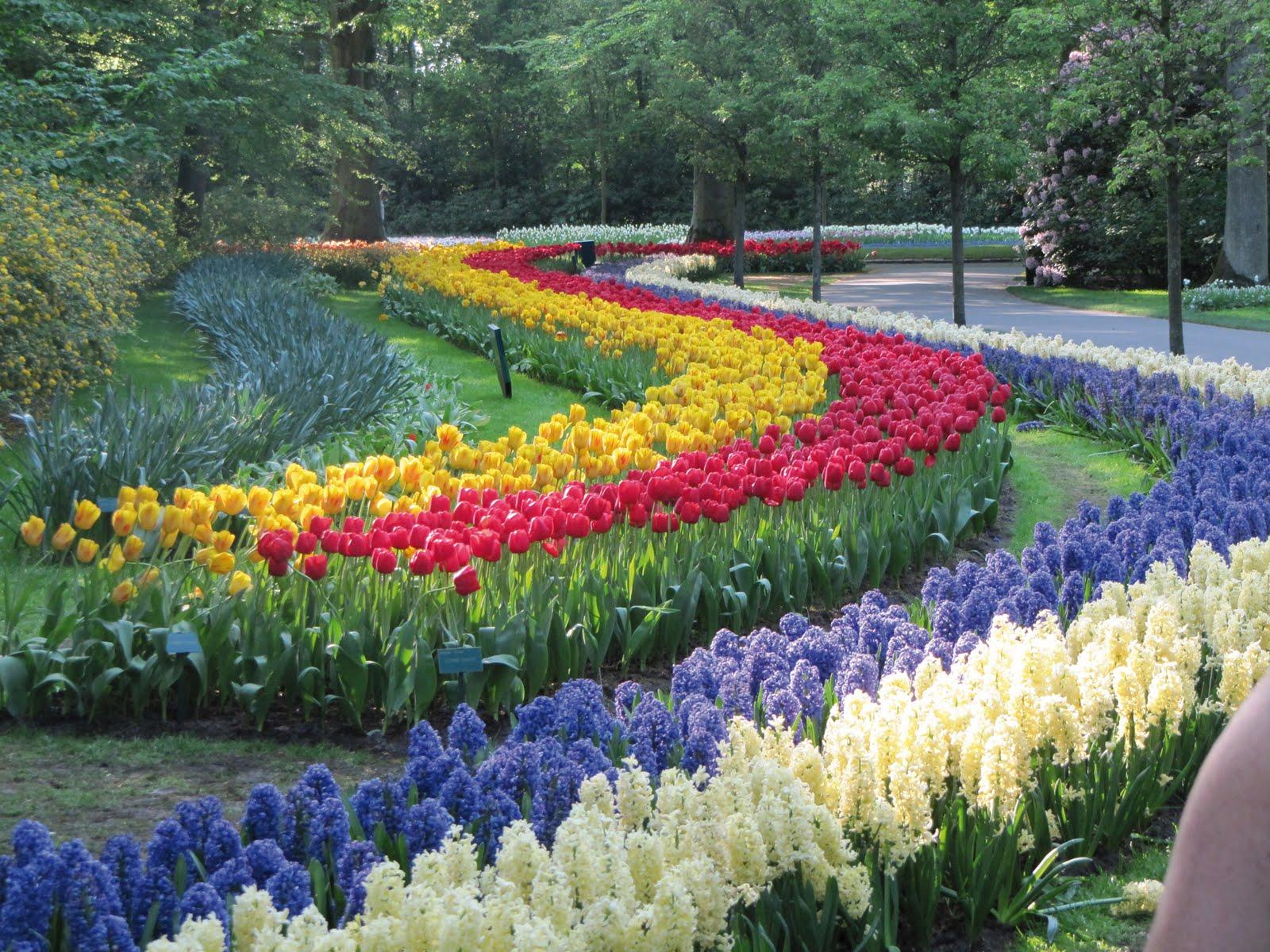 Holanda la tierra de los tulipanes paralelo 20 - Jardines de tulipanes en holanda ...
