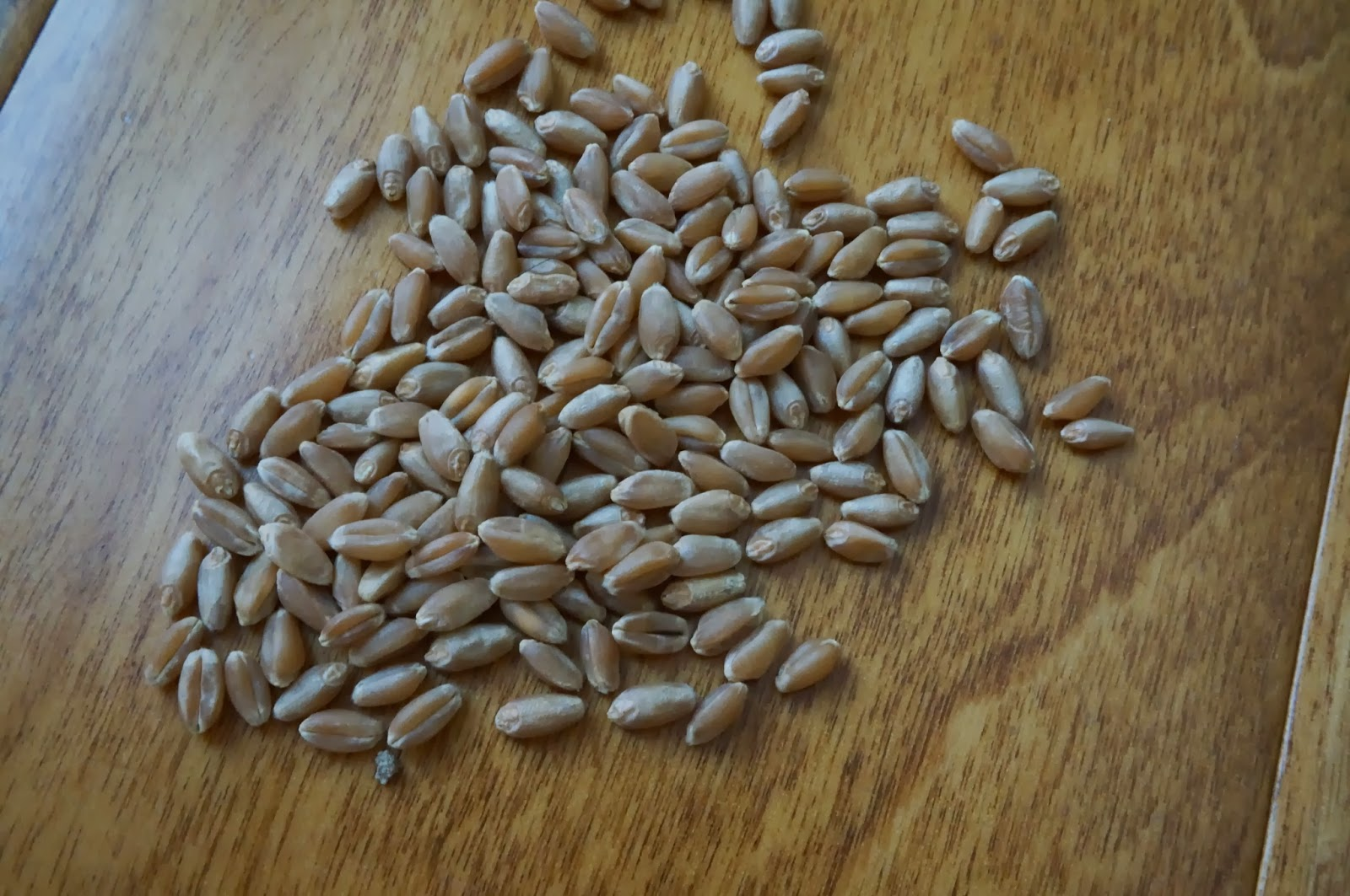 wheat seeds, whole grain wheat