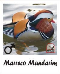 rincão aves ornamentais marreco mandarim