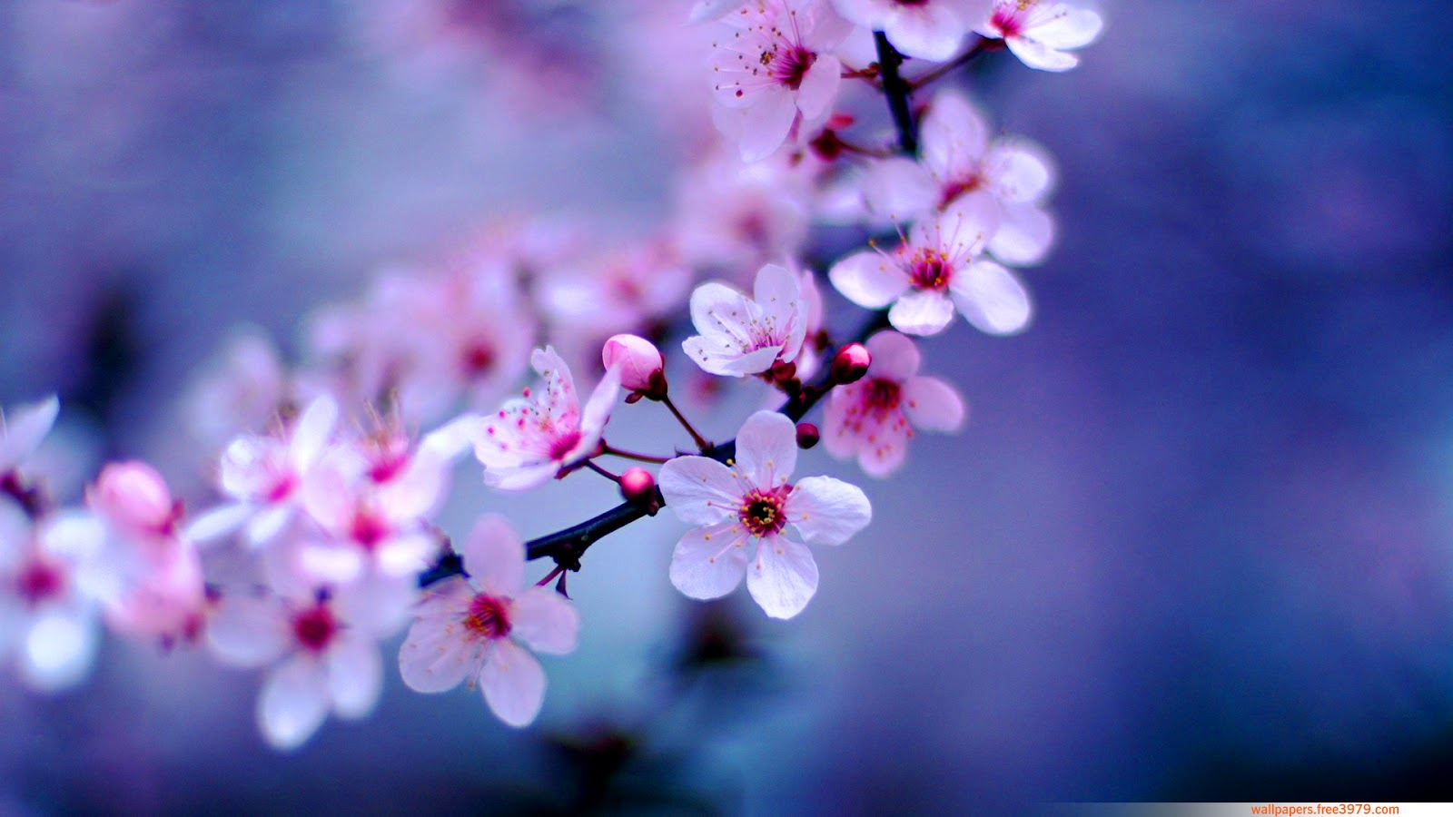 20 Asian Cherry Blossom Flower
