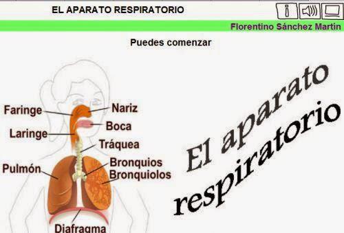 http://cplosangeles.juntaextremadura.net/web/edilim/tercer_ciclo/cmedio/las_funciones_vitales/la_funcion_de_nutricion/respiracion/el_aparato_respiratorio/el_aparato_respiratorio.html