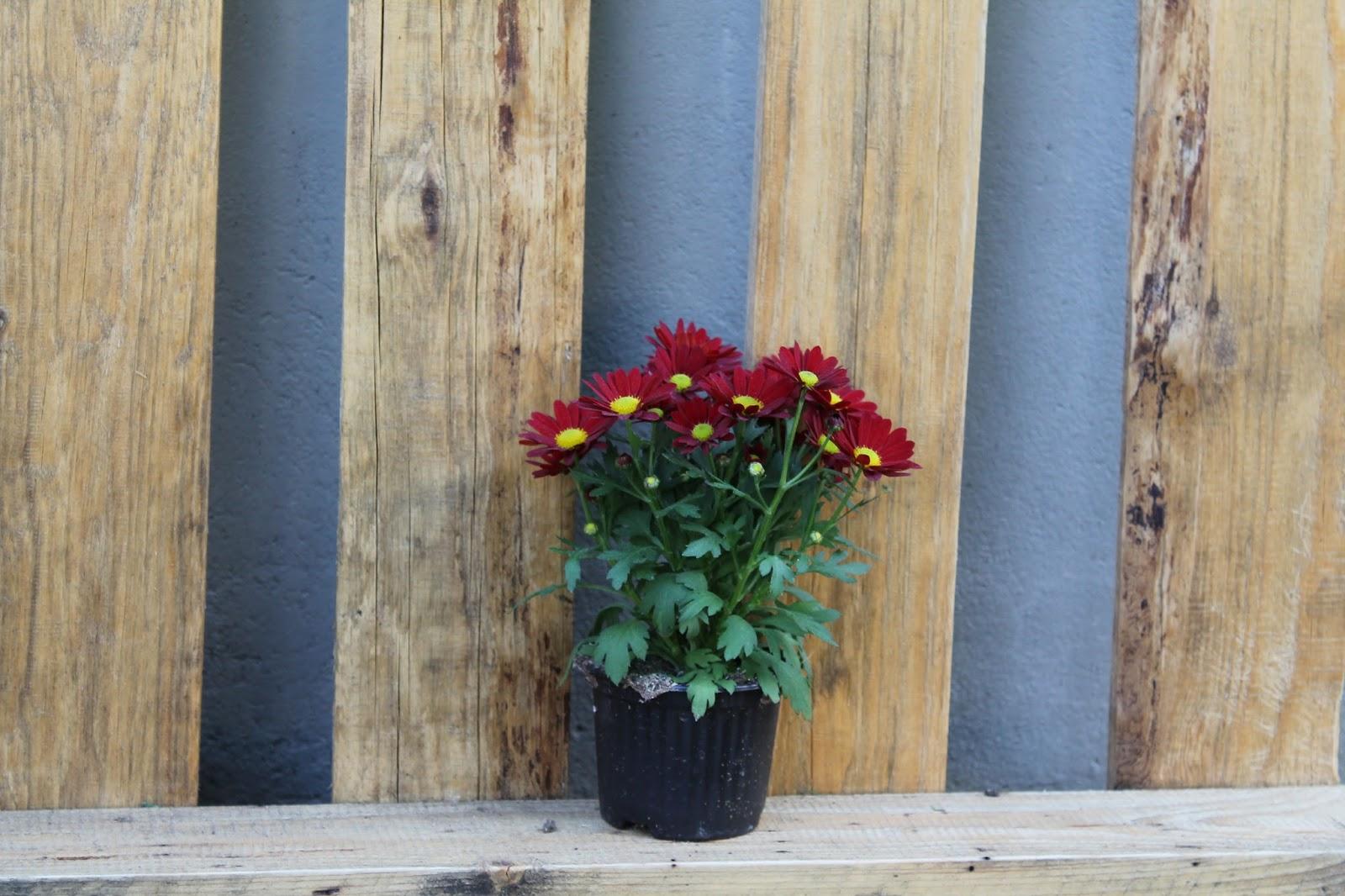 Blumen im Palettenregal
