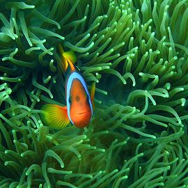 Gambar Ikan Laut Cantik @ Digaleri.com
