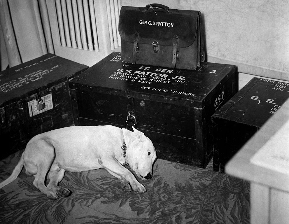 General George S. Patton's dog on the day of Patton's death on December 21st, 1945