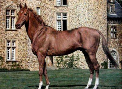 pinturas-caballos-al-oleo