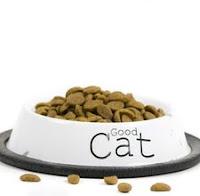 5 Poin Penting Dalam Merawat Kucing