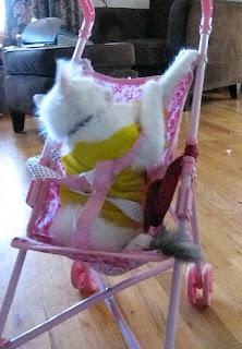 cat the princess
