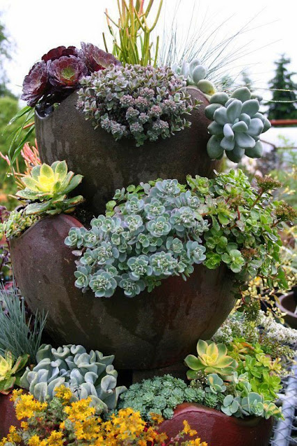 Savvy Succulents