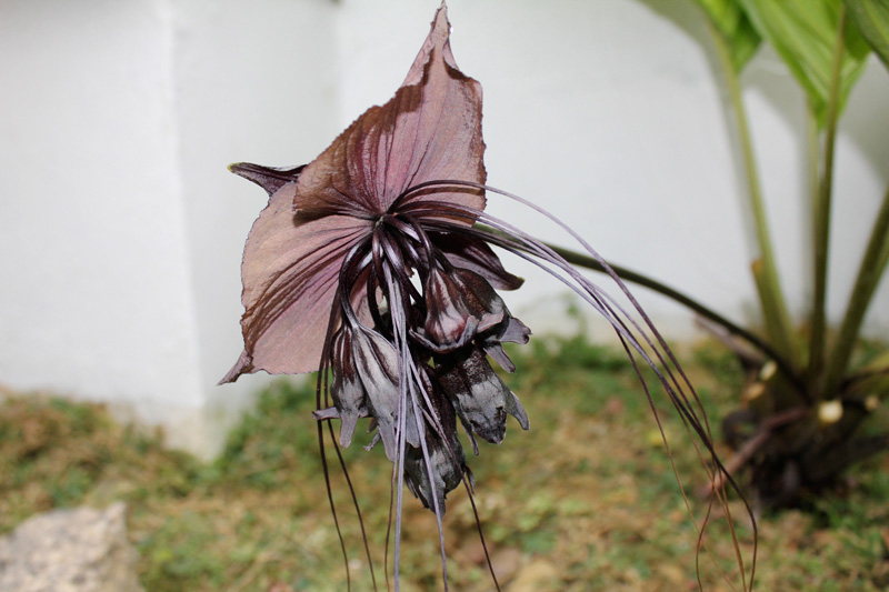 Fotos de flores naturais e seus nomes Ultradownloads
