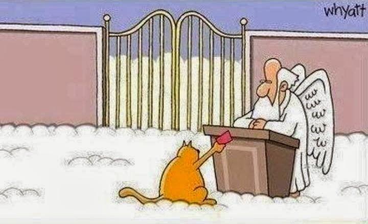 9 жизней кота
