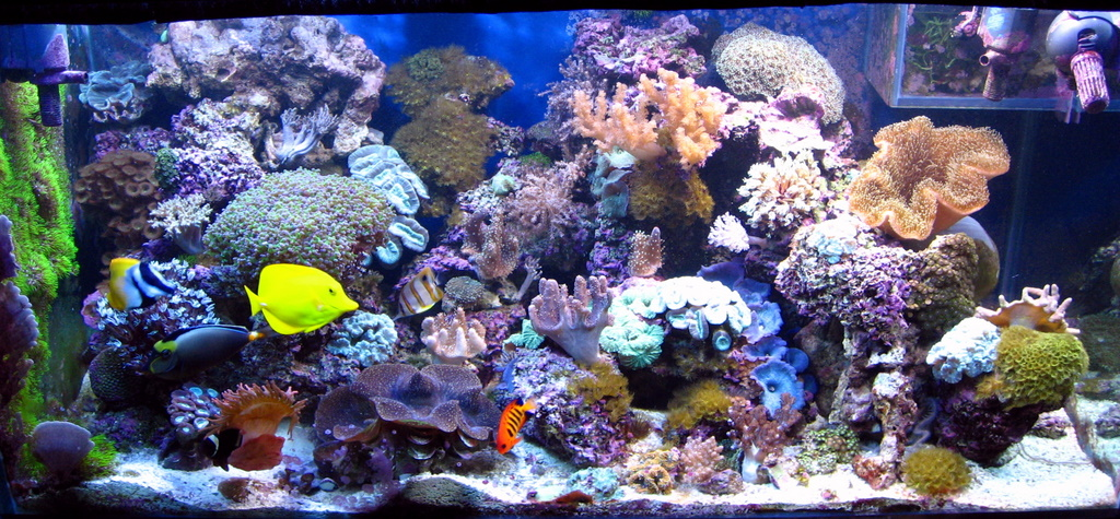... The Main Structure Of This Aquascape, And It Is Populated By Corals And  Other Marine Invertebrates As Well As Coralline Algae, Which Together Serve  Much ...