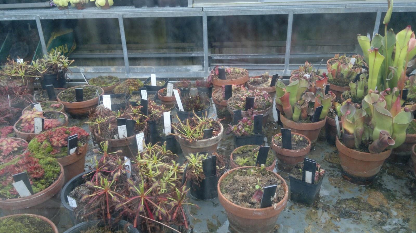 unsere fleischis fleischfressende pflanzen im botanischen. Black Bedroom Furniture Sets. Home Design Ideas