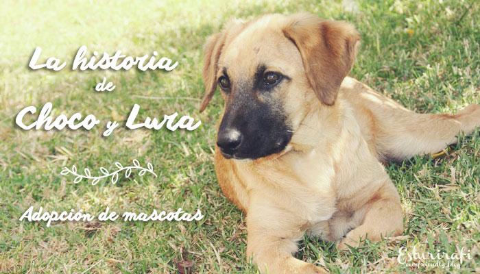 La historia de Choco y Lura. Adopción de mascotas
