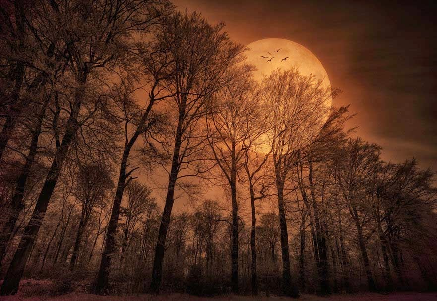 nature-night-moon-birds