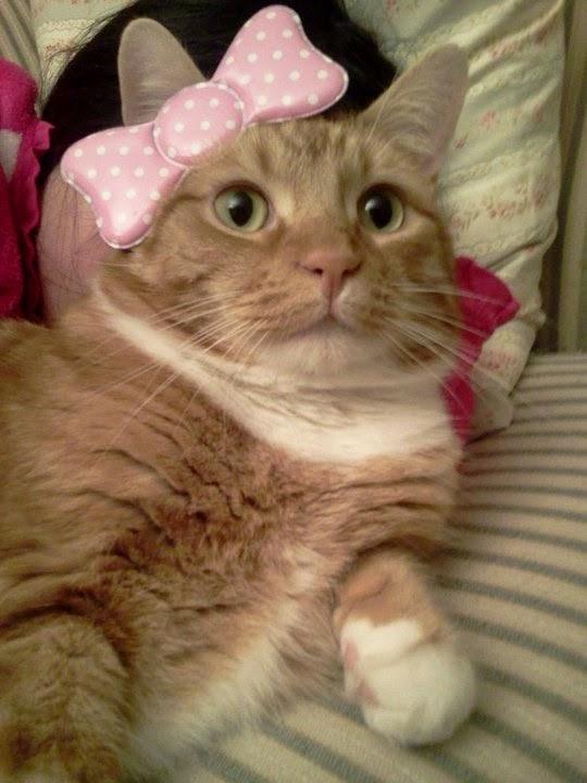 Ripple Kitty