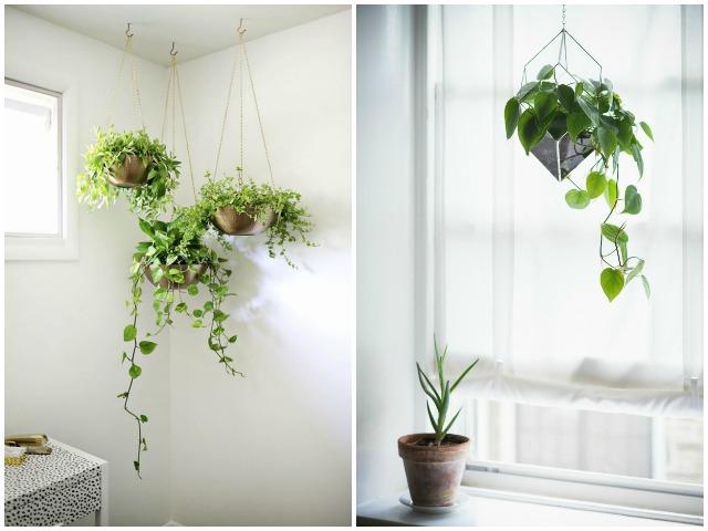 Decoraci n f cil 10 plantas que purifican el ambiente - Plantas de interior que purifican el aire ...