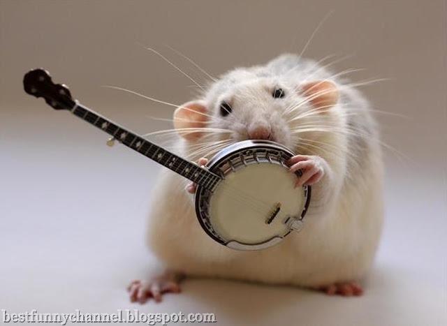 Rat musician 2