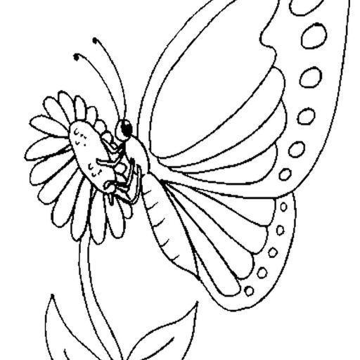 para ensino fundamental atividades de colorir milhares de borboletas