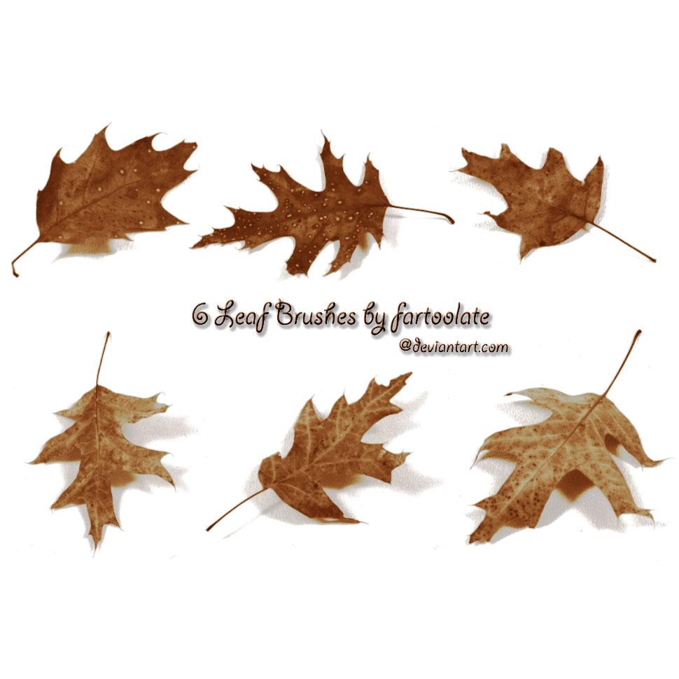 The Photoshop Brush Blog: Autumn leafs Photoshop Brushes