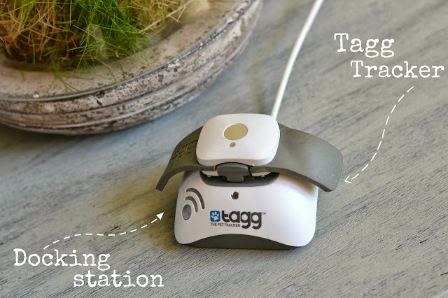 Tagg Pet tracker GPS for dogs, #pettracker , GPS and fitness monitor for dogs
