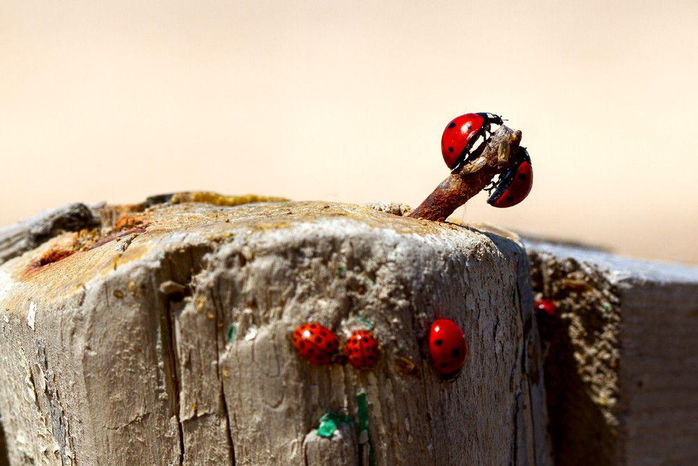 19.  Ladybird by Ramin Hasanov