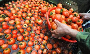 Want cheap industry imports canned tomatoes