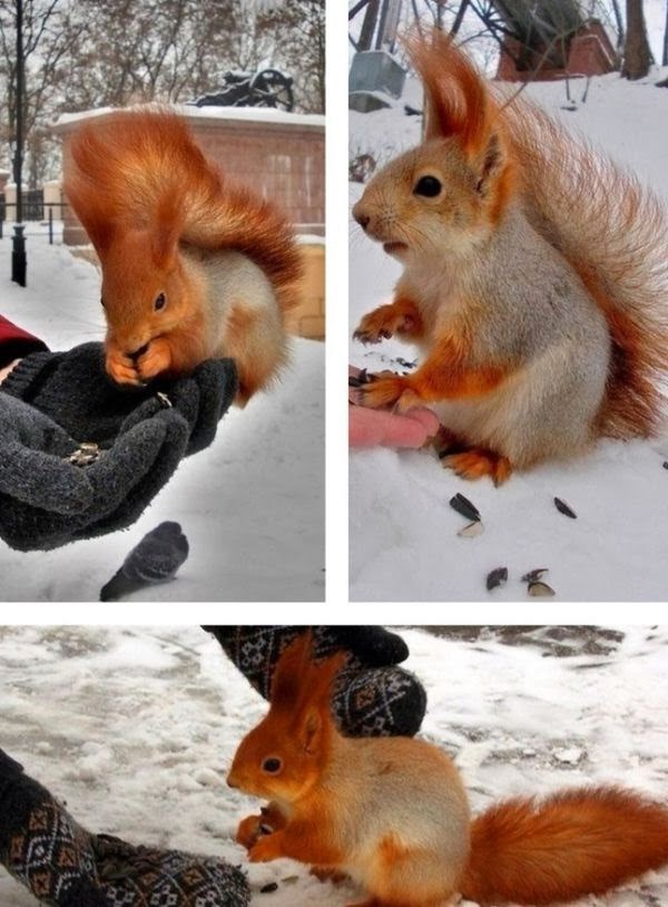 Funny animals of the week - 7 February 2014 (40 pics), squirrel picture