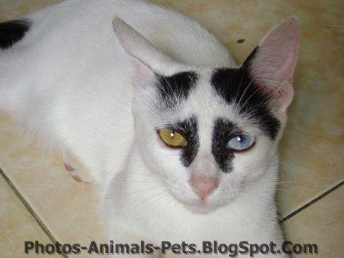 http://2.bp.blogspot.com/-wIUOXm5Bn8E/TxhLqw_4VuI/AAAAAAAAC8E/aq__5G9GiSs/s1600/images%2Bof%2Bcats%2B.jpg