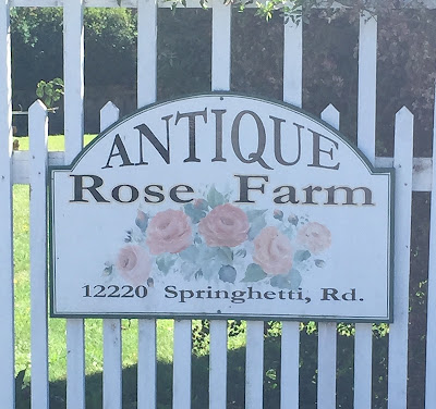 https://www.facebook.com/pages/Antique-Rose-Farm/724041350987556?rf=148316371879437