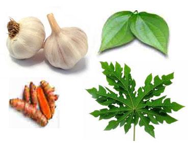 Lele Organik Dari Bawang Putih, Daun Sirih, Kunir, dan Daun Pepaya