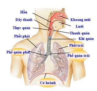 Hệ hô hấp ở người