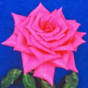 Bunga Mawar Shanada