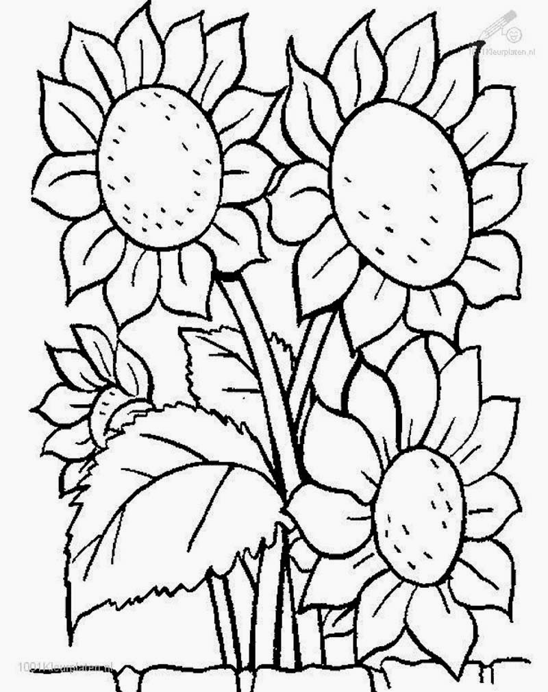 Mewarnai Gambar Bunga | AyoMewarnai