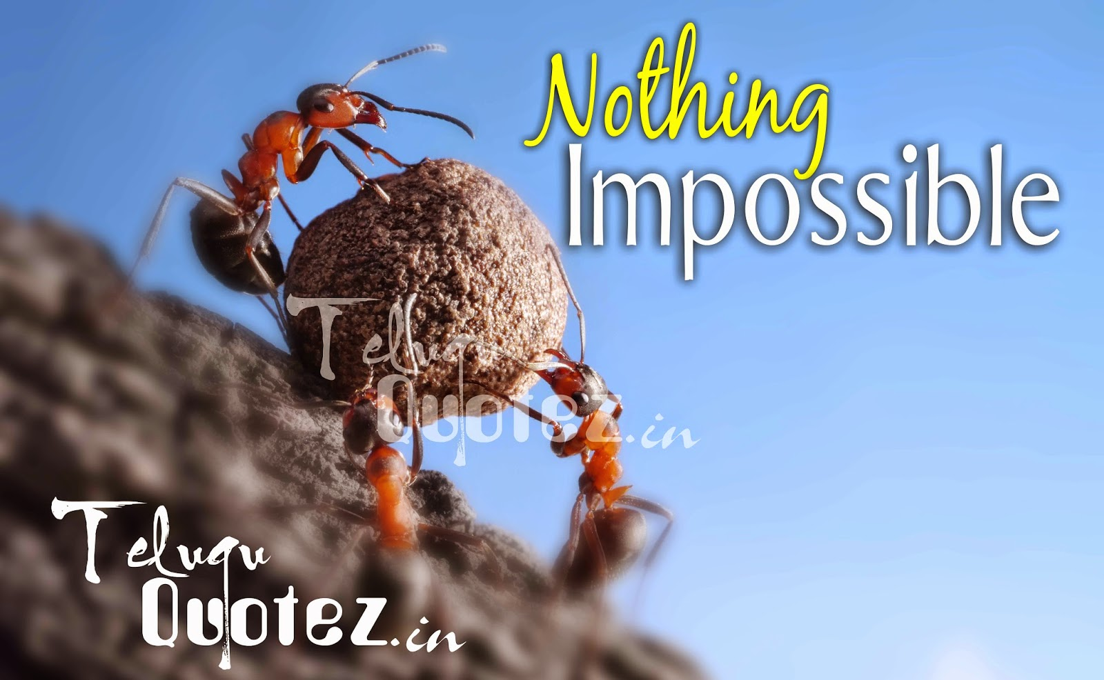 nothing impossible success quotes