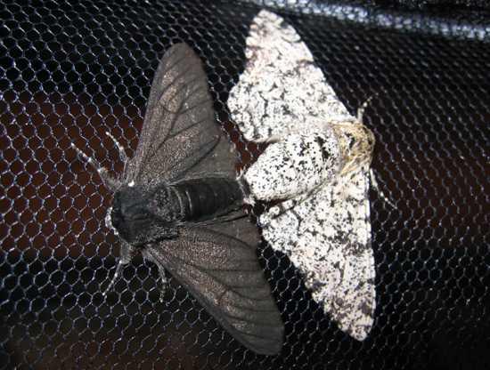 Вы можете наблюдать кружащих вокруг вас бабочек