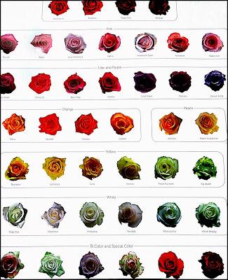 Gambar Bunga Mawar Merah,Putih,Ungu,Pink,Kuning,hijau,hitam
