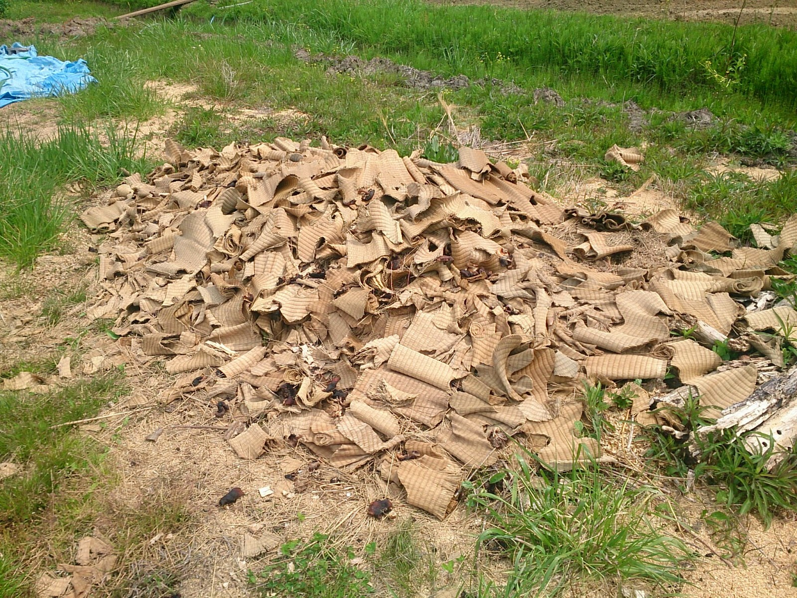 堆肥素材の畳表