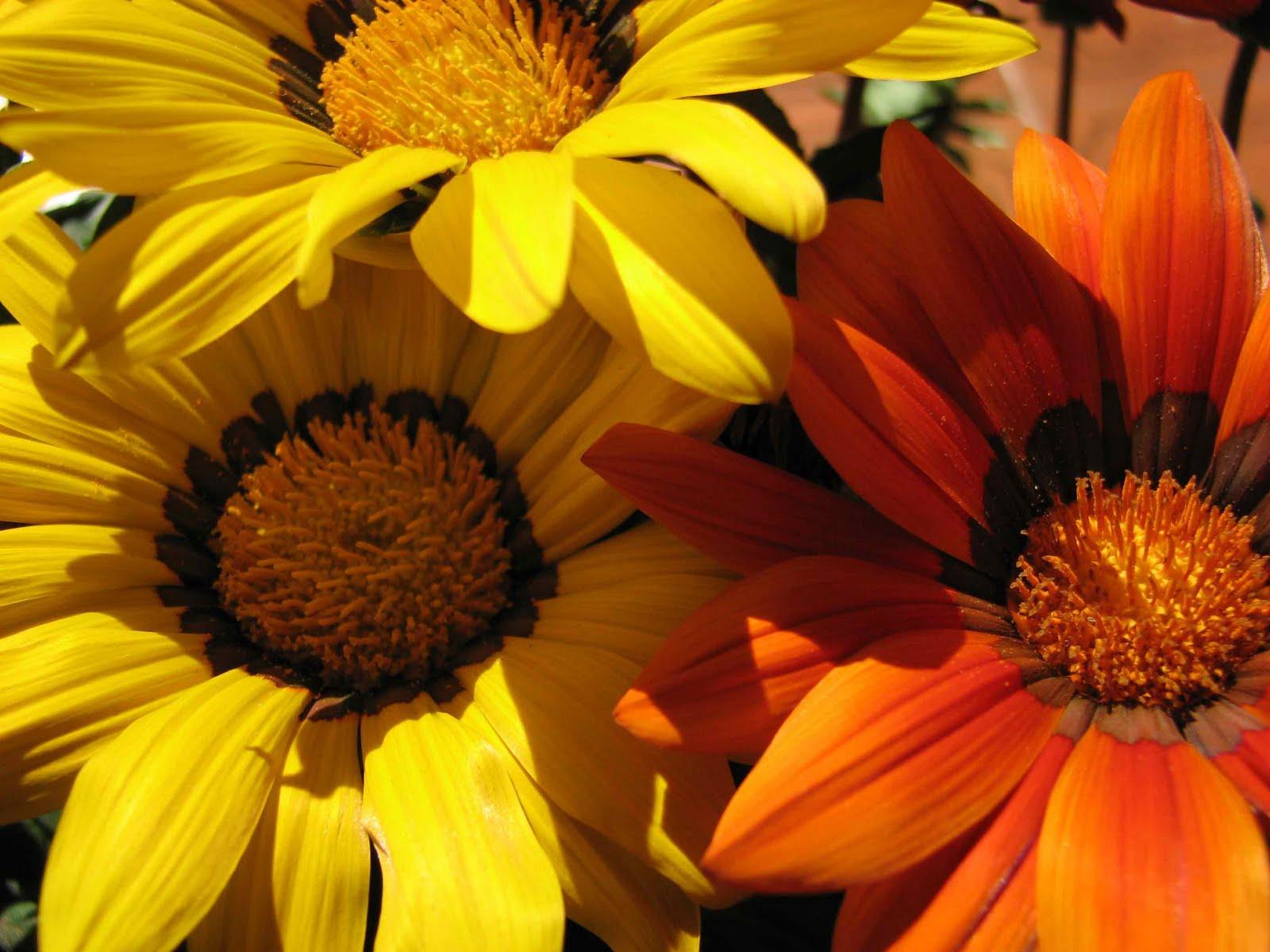 La gattola fiori e piante piante da esterno for Piante fiori