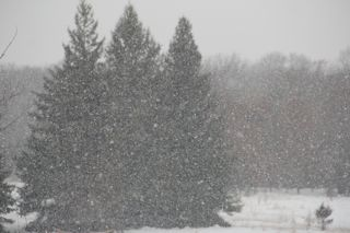 photo of snow falling on pines