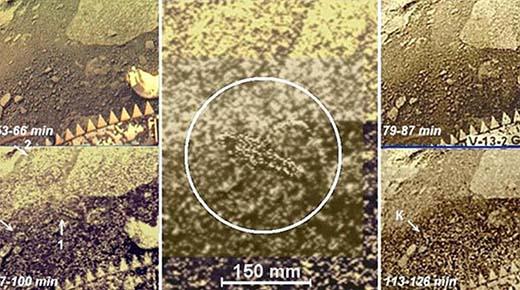 Desclasifican imágenes secretas del planeta Venus de hace 30 años que muestran a seres vivos