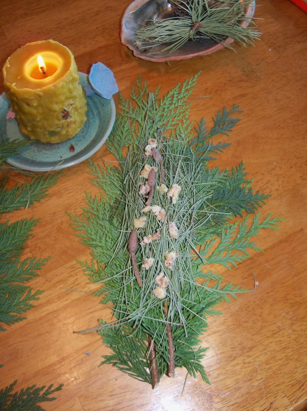 Plant Journeys Conifer Tree Potions Solstice Medicine