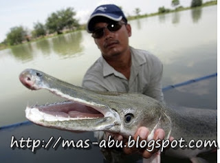 6. Alligator Gar