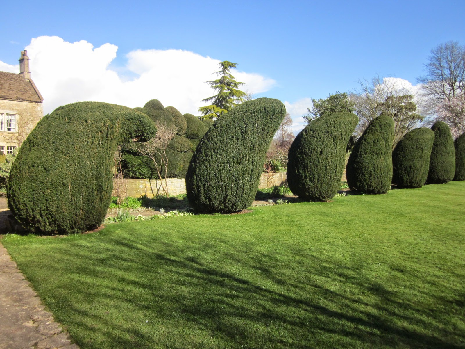 The gigglesome yews at The Courts, Holt, Wiltshire