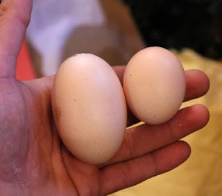 One duck egg, one chicken egg