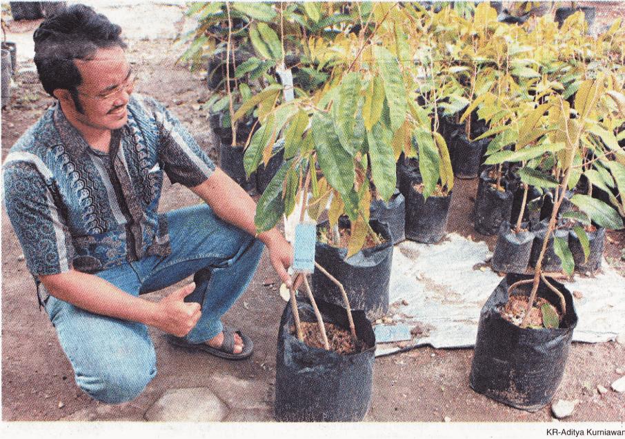 Pak Rob dengan Durian Menoreh Kuning Kaki Tiga