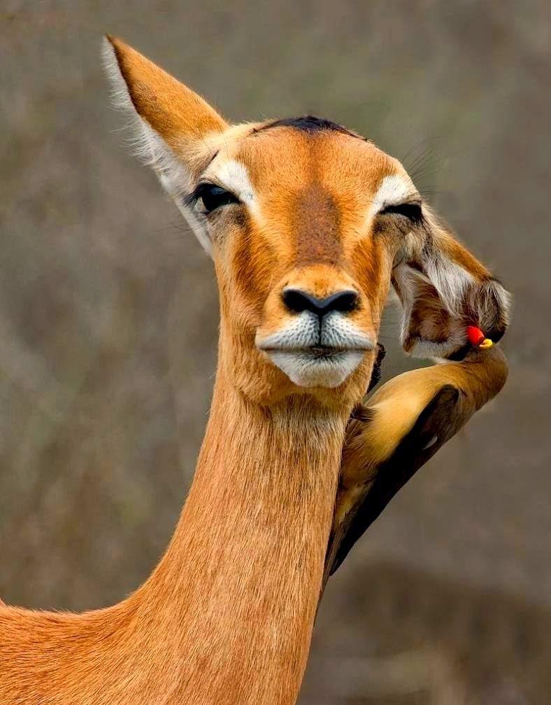 Aksi Binatang Di Zoo Relaks Minda