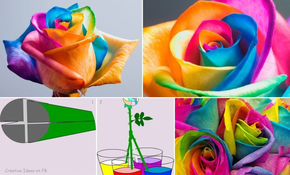 showme nan rainbow roses