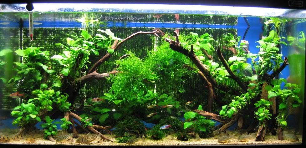 Aquaticszone Driftwood 407 Pageviews
