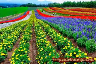 Taman bunga hokkaido